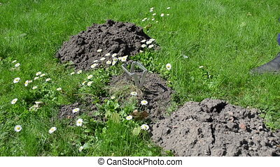 gardener mole trap