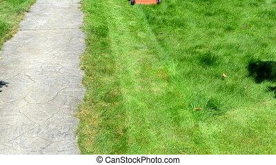 gardener mow lawn - gardener male man in shorts and...