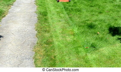 gardener mow lawn - gardener male man in shorts and...