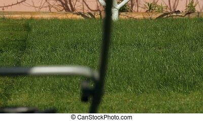 Gardener Mows Grass.