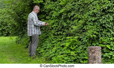 Gardener near vines