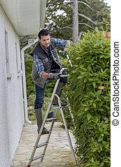 gardener on the hedge