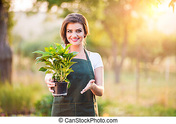 Gardener passing a seedling in flower pot, sunny nature
