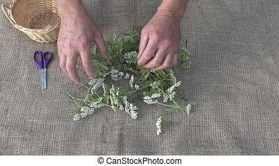 Gardener preparing to dry herbs, 4K - Gardener preparing to...
