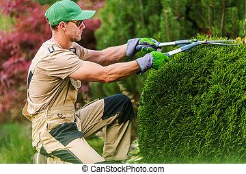 Gardener Pruning Plants Using Scissors.