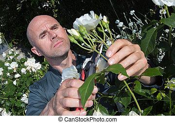 gardener pruning the flowers