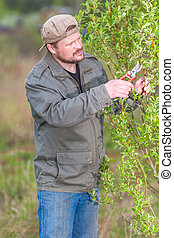 Gardener pruning the tree in his garden