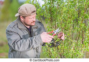 Gardener pruning the tree in his green garden