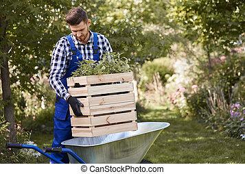 Gardener putting seedling in wheelbarrow