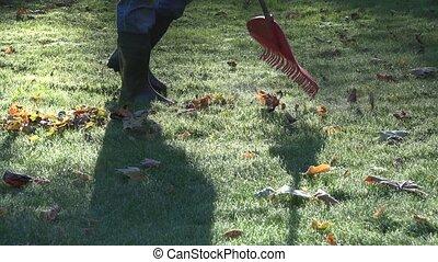 Gardener raking leaves from frozen lawn in autumn morning. Closeup. 4K