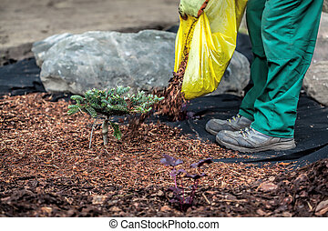 Gardener spills mulch under bush - Mulch and barrier weed...