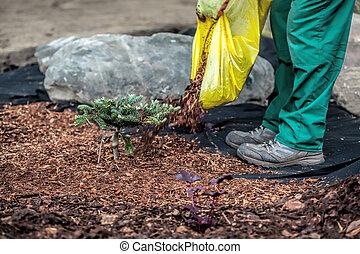 Gardener spills mulch under bush - Mulch and barrier weed...
