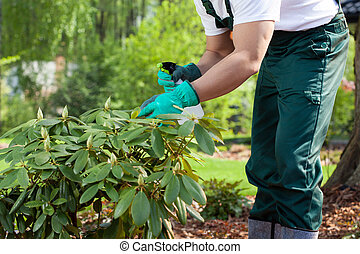 Gardener spraying a plant - Horizontal view of a gardener...