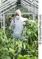 Gardener spraying plants in greenhouse