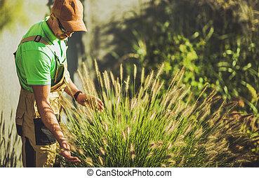 Gardener Taking Care of Decorative Garden Grasses