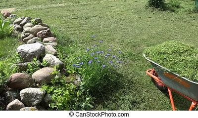 Gardener  transporting cut grass  with wheelbarrow