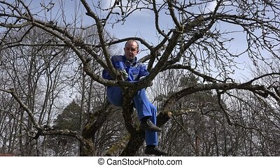 gardener trimming apple tree branches with shears on blue...