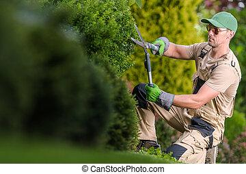 Gardener Trimming Decorative Garden Plants