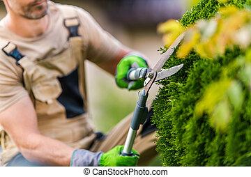Gardener Trimming Garden Decorative Plants Using Large Garden Scissors