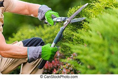 Gardener Trimming Plants Using Garden Scissors