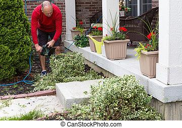 Gardener trimming shrubs in the garden