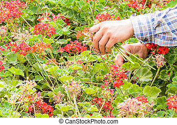 Gardener trimming