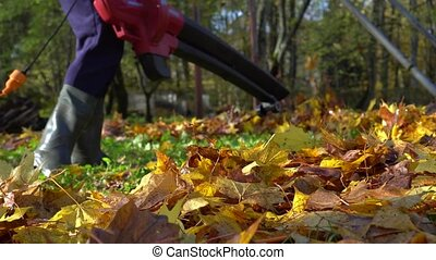 Gardener using blower machine to clean backyard from colorful leaves