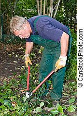 Gardener with cutter - Middle aged forest worker with shear
