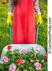 Gardener with flowers in wheelbarrow