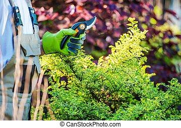 Gardener with Garden Snips