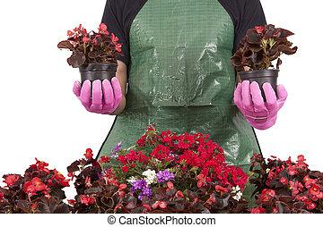 gardener with plant pots