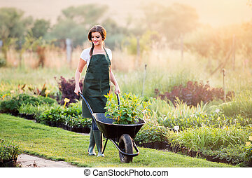 Gardener with seedling in wheelbarrow, sunny nature
