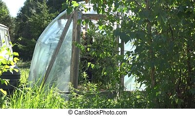 Gardener woman care tomatoes plants with watering can in greenhouse.