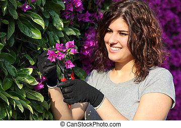 Gardener woman cutting a pink flower with secateurs