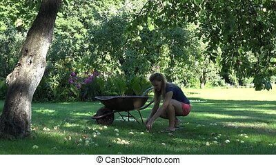 Gardener woman picking windfall rotten fruits to rusty wheelbarrow in garden. 4K