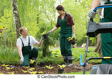 Gardeners planting in the park