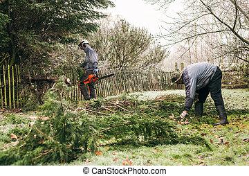 Gardeners pruning tree - Professional gardeners pruning...