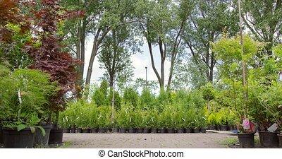 gardeners, voortvarend, boompje, op, wagon