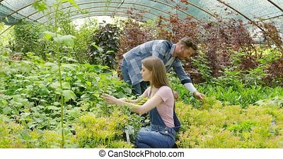 Gardeners working in greenhouse - Male and female...