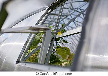 cucumber seedlings growing at greenhouse - gardening and...
