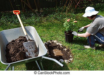 Gardening at leisure - Woman put flowers in garden at...