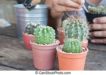 Gardening cactus in pot plant on wooden table