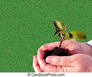 Gardening Care - Handy Background