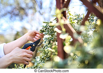 Gardening. Care of plants in the garden.