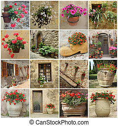 gardening collage of flowerpots on wall, terrace, backyards ...