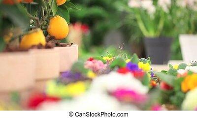 gardening concept, florist woman