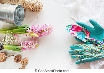Gardening concept. Still life of seedling hyacinth, garden tools, scissors, twine, tubers-bulbs gladiolus with copy space. Top view.