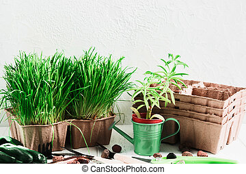 Gardening concept with green grass, succulent, organic pots and tools