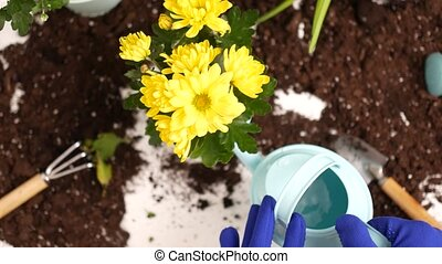 Young woman replanting flowers. - Gardening concept. Young...