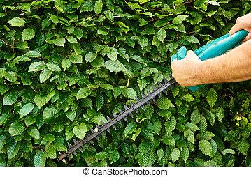Gardening - Cutting a hedge, gardening